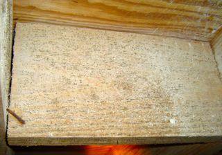 halloween microbial infestation mold floor joist crawl space