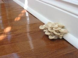 water-management-checklist-fungus-in-wall
