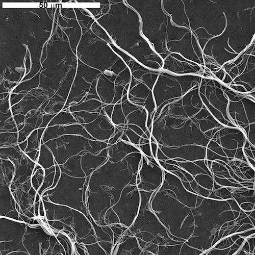 chrysotile asbestos sem image UICCA 500