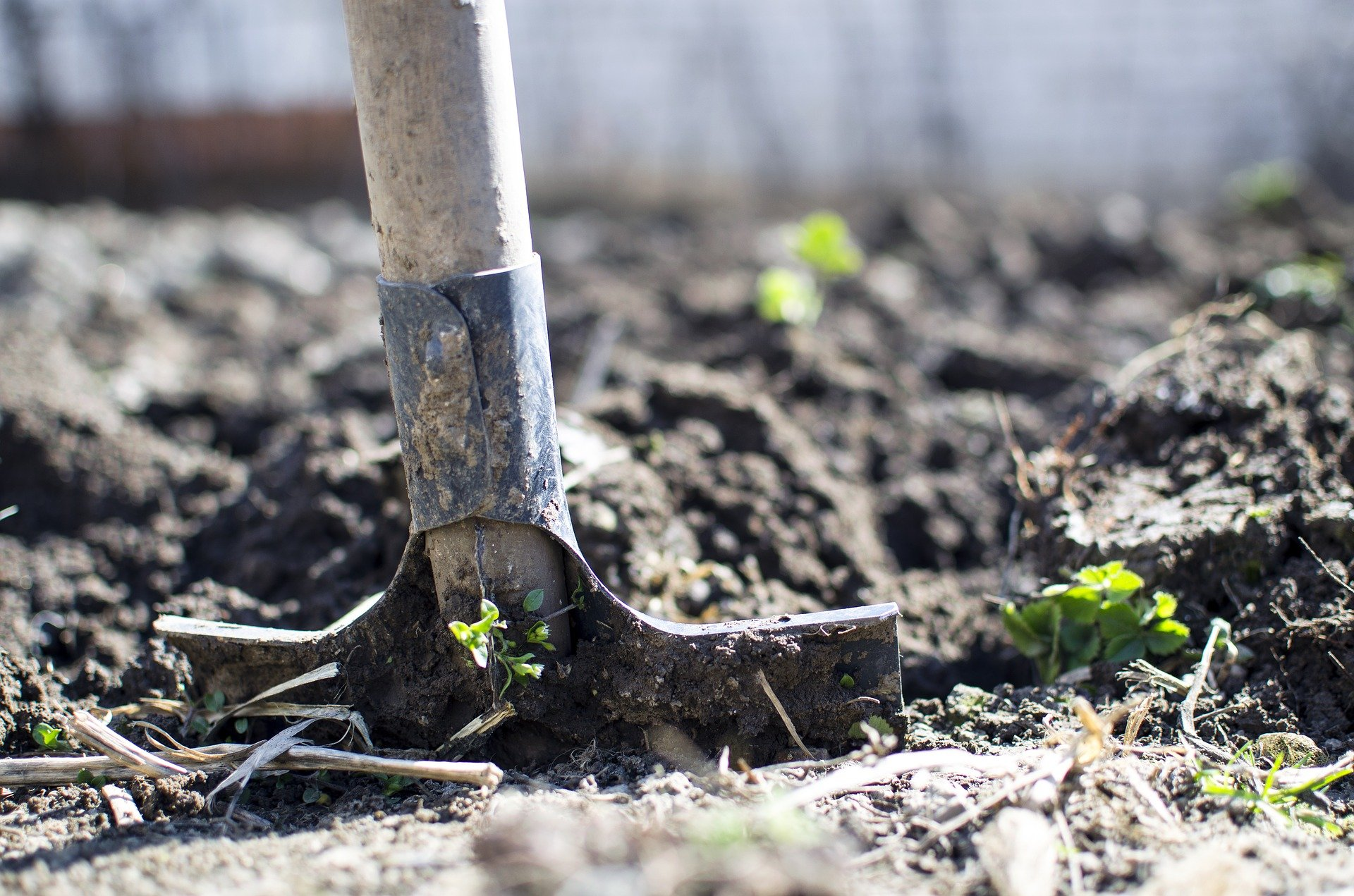 Préparer le terrain pour accueillir le futur potager pour récolter ces propres légumes.