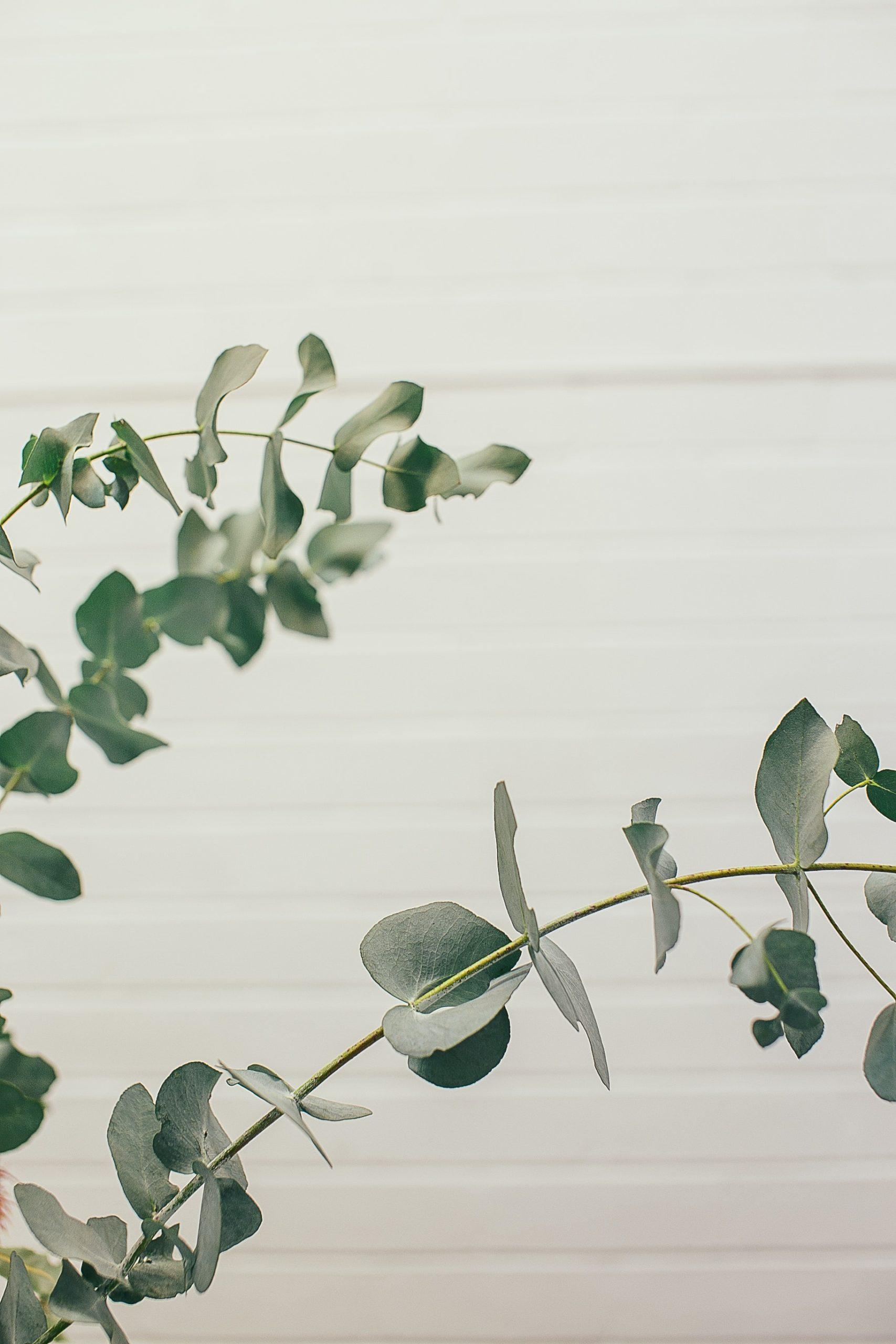 L'huile essentielle d'eucalyptus est un peu moyen de faire entrer la nature chez vous.