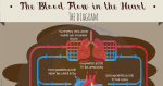 The Blood Flow in the Heart: The Diagram