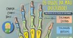 Os Ossos da mão: Conhecendo a sua Anatomia