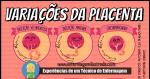 A Placenta e seus tipos