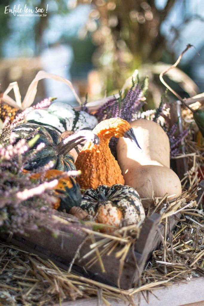 halloween pairidaiza brugelette 683x1024 Halloween à Pairi Daiza   dates et informations 2016