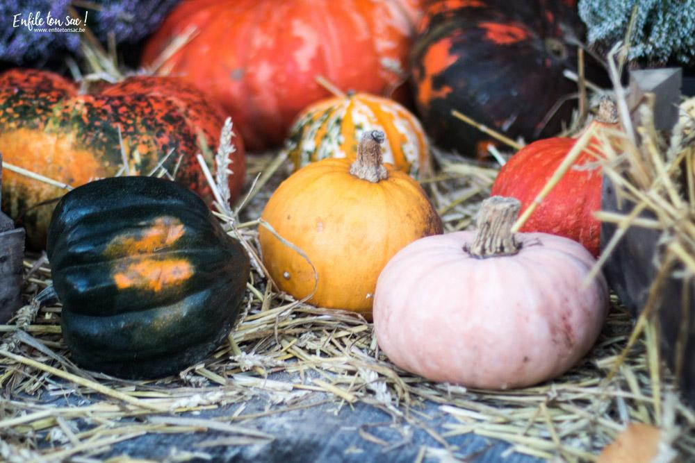 pairidaiza citrouilles Halloween à Pairi Daiza   dates et informations 2016