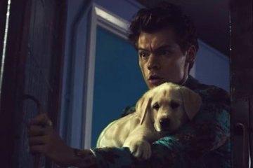 Harry Styles Kiwi Music Video