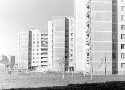 A photo showing the carefully planted trees after the construction of apartment buildings.