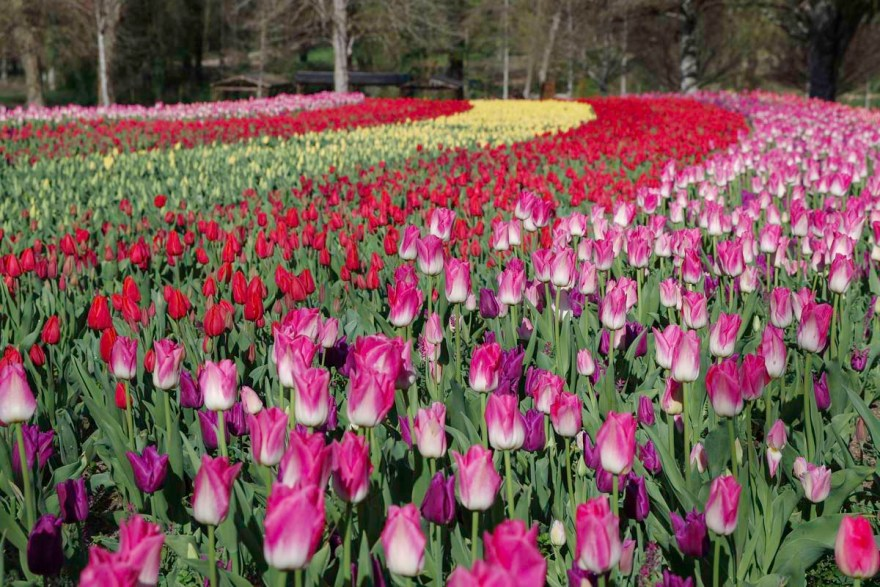 jardin du chateau-cheverny