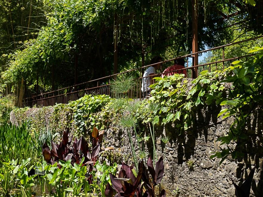 bassin dans la bambouseraie d'Anduze