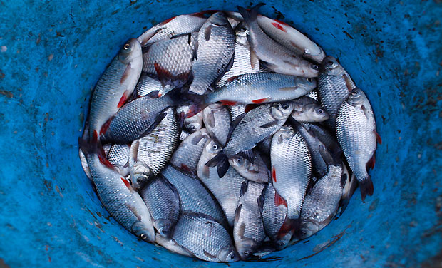 Saudi Arabia to prevent EU pork-fed fish from entry