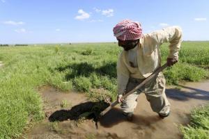 A farmer works at a wheat field in Ras al-Ain province
