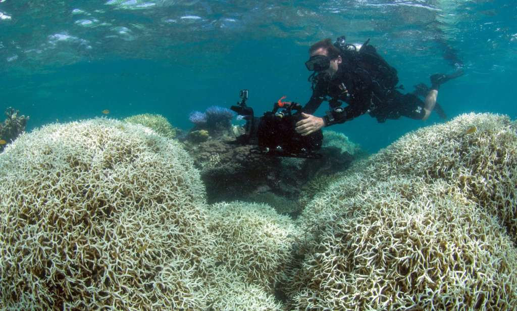 Bleaching Kills 35% of Coral in Great Barrier Reef's North