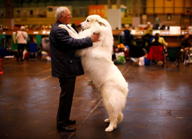 How Dogs Became Man's Best Friend – Twice Over