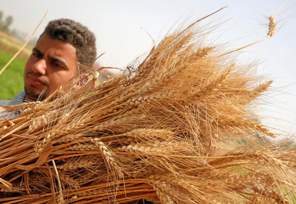 Egypt Public Prosecutor Orders 13 Arrested in Wheat Corruption Case