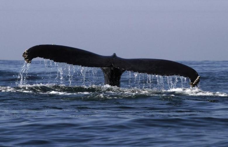 Baby Whales 'Whisper' to Mothers for Protection