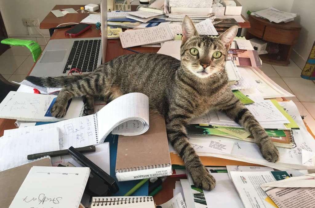 A Times Tradition: Meet the Bureau Cats
