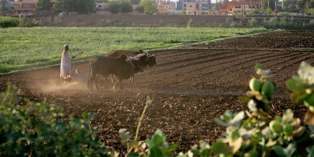 Turkey, Sudan Launch $10 Billion Agriculture Partnership