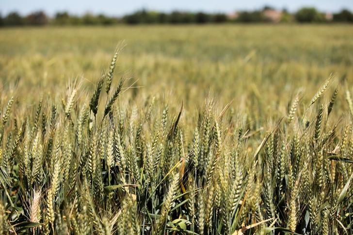 Saudi Arabia Submits Bids to Purchase 1.5 Mln Tons of Feed Barley