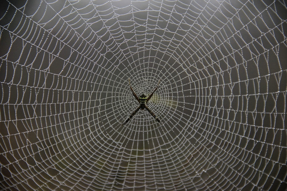 Spider Webs Can be Used in Cosmetic, Reconstructive Surgeries