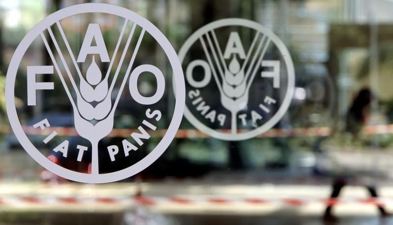 FAO Chooses Egypt to Start Journey to Fight Hunger in Near East, North Africa
