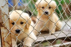 animal-shelter-puppies