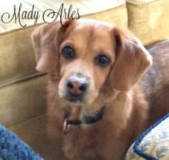 Mady Arles