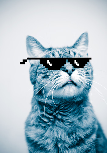 Meme cat with cool sunglasses