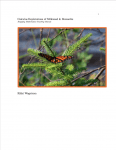 Calculus Explorations of Milkweed & Monarchs by Rikki Wagstrom