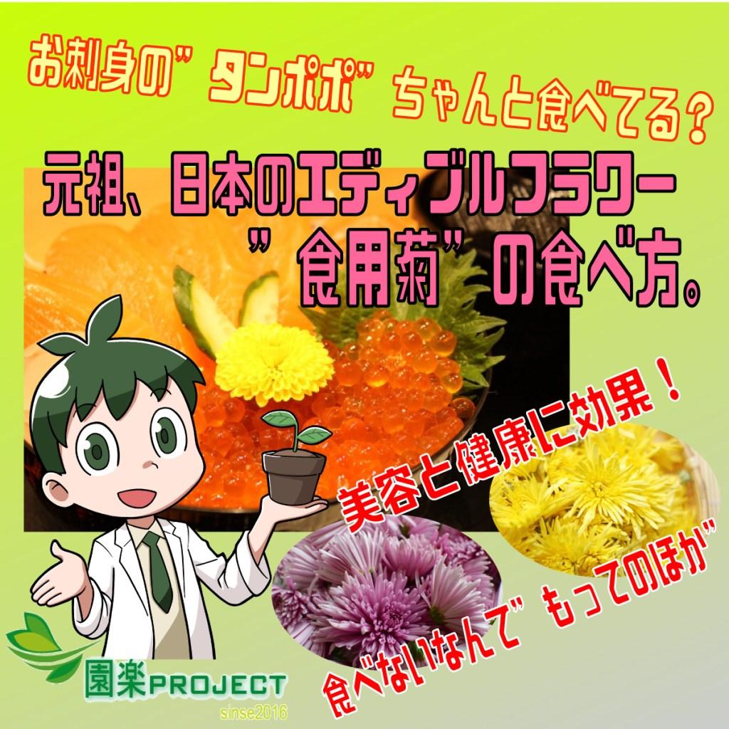 食用菊表紙