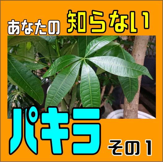 パキラ表紙01