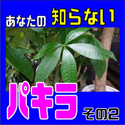 パキラ表紙02
