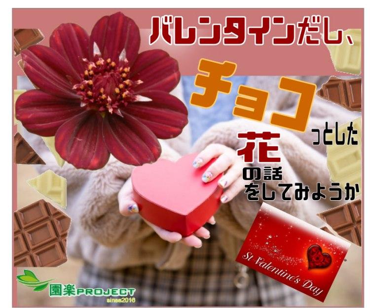チョコレートコスモス表紙