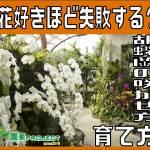 胡蝶蘭02表紙