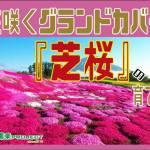 芝桜-表紙