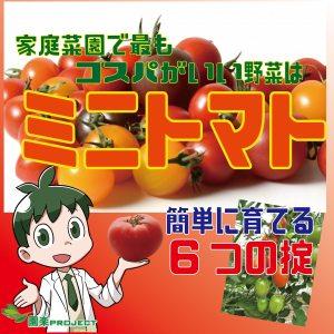 トマト表紙