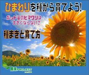 ひまわり-表紙