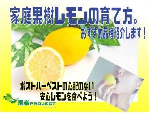 レモン表紙