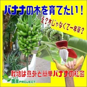 バナナ表紙