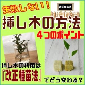 挿し木の方法