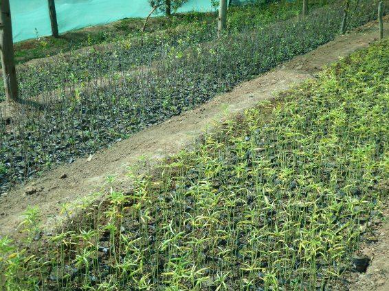 5 Uebstbeem fir rauszeplanzen