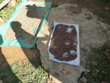 Kaffi- a Kakaobongen