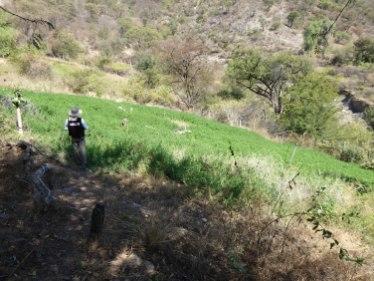 Alfalfafeld dank der Bewässerung