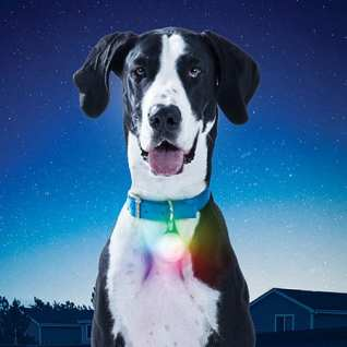 Nite Ize SpotLit XL Rechargeable Collar Light MSRP $19.99