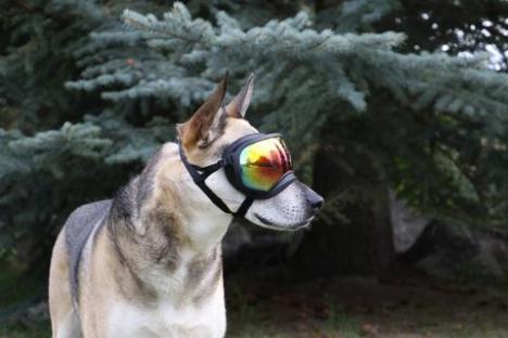 Rex Specs dog goggles MSRP $79.95