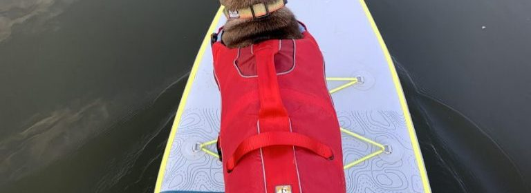 Kurgo Surf and Turf Life Jacket