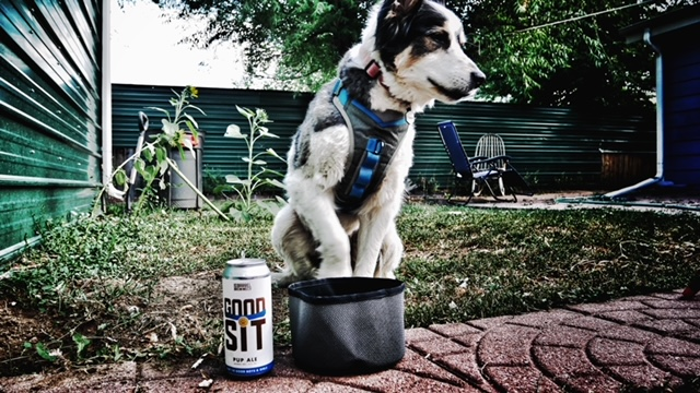 Dog Day Gift Guide 2021 - Treat Your Dog to the Best Gear! 8