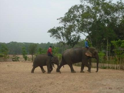 Arbeitselefanten im Umland von Vientiane: Die Elefanten werden von klein auf für die Arbeit im Wald ausgebildet
