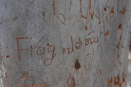 Graffitti auf den Bäumen