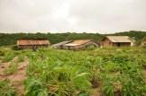 O Engenho e o Galpão da ACORDI, nos Areais da Ribanceira: espaços de luta e resistência da agricultura tradicional e da pesca artesanal